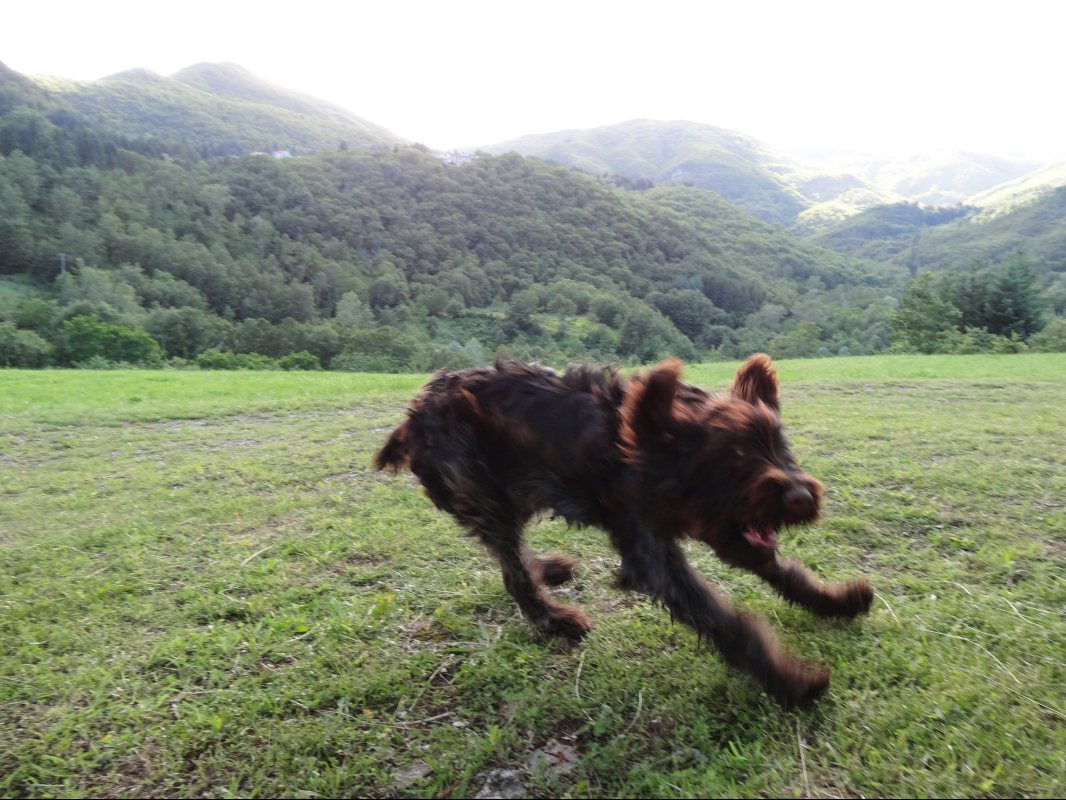 Lupo at Colle di Fragaiolo